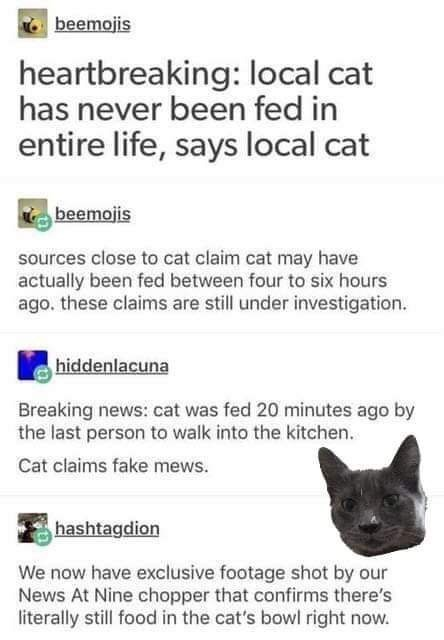 Text - beemojis heartbreaking: local cat has never been fed in entire life, says local cat beemojis sources close to cat claim cat may have actually been fed between four to six hours ago. these claims are still under investigation. hiddenlacuna Breaking news: cat was fed 20 minutes ago by the last person to walk into the kitchen Cat claims fake mews. hashtagdion We now have exclusive footage shot by our News At Nine chopper that confirms there's literally still food in the cat's bowl right now.