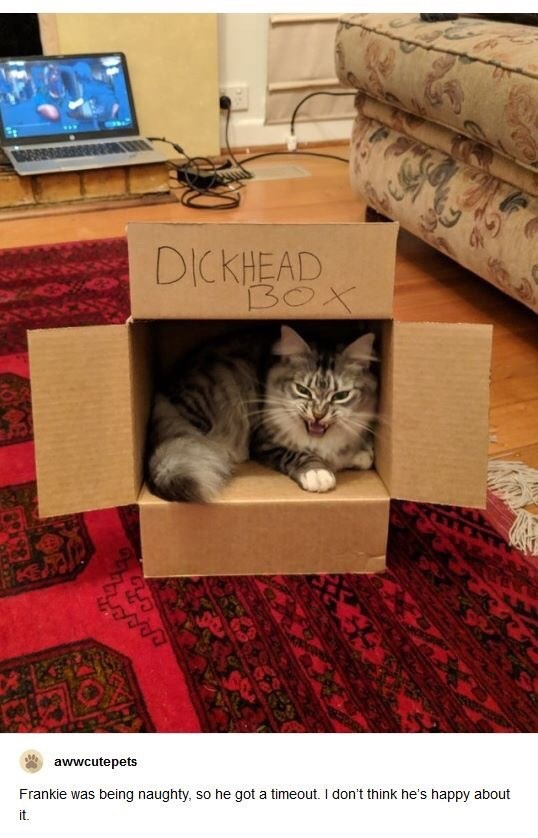 Cat - DICKHEAD BOX awwcutepets Frankie was being naughty, so he got a timeout. I don't think he's happy about it.