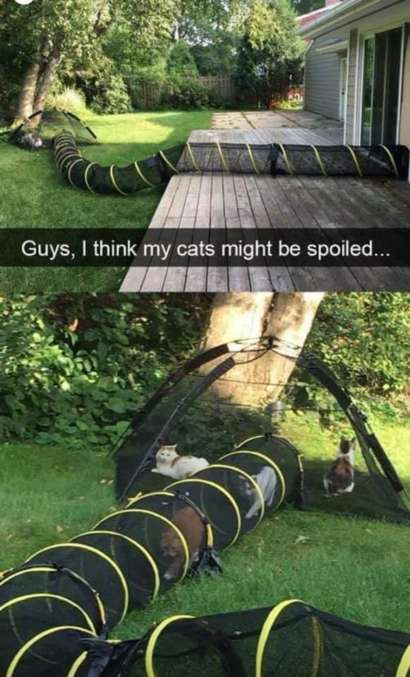 Lawn - Guys, I think my cats might be spoiled...