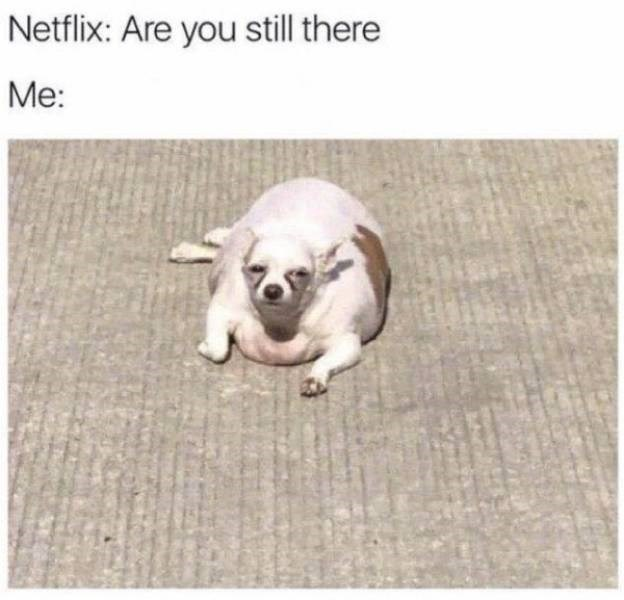 sad meme - Dog - Netflix: Are you still there Me: