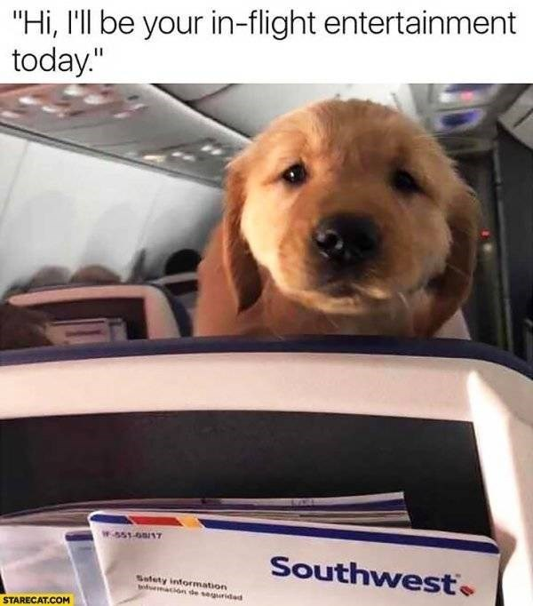 """Meme - """"'Hi, I'll be your in-flight entertainment today.'"""""""