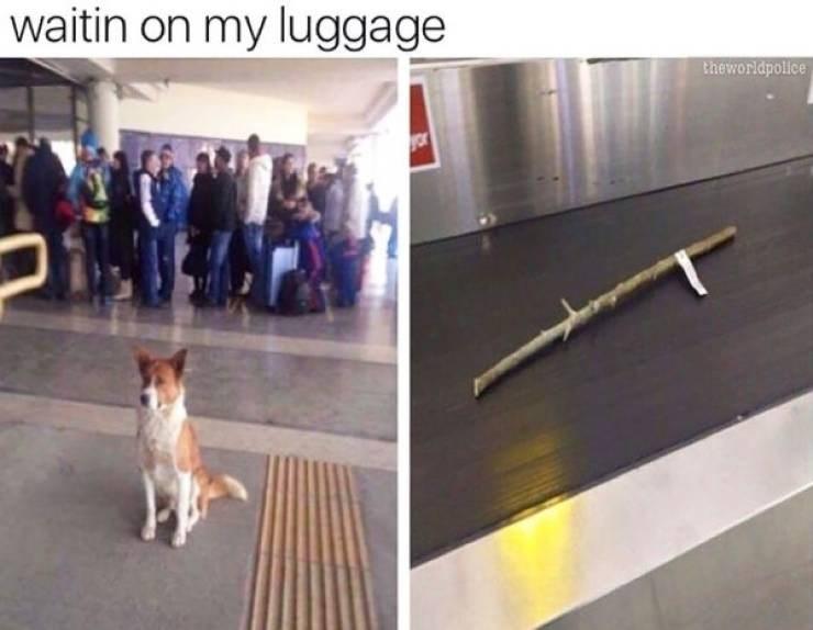 Dog - waitin on my luggage theworldpollice ror