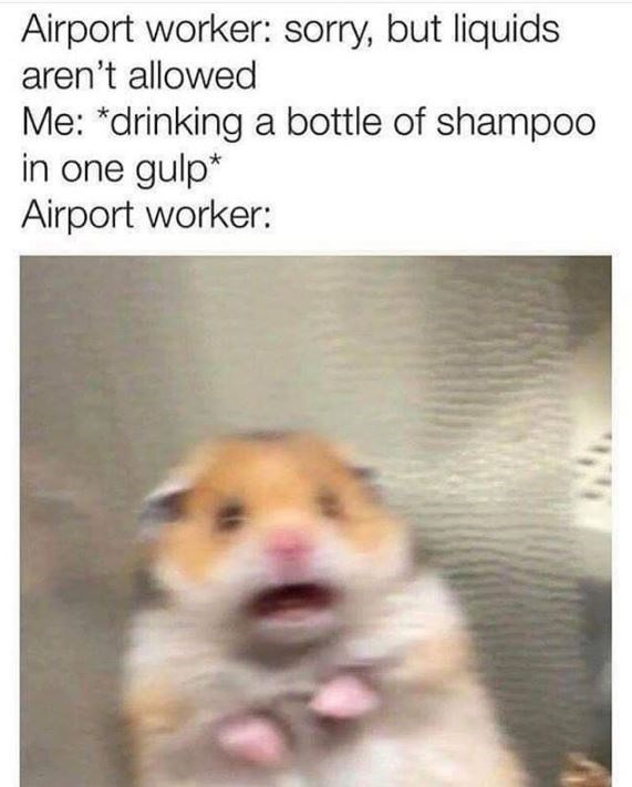 Hamster - Airport worker: sorry, but liquids aren't allowed Me: *drinking a bottle of shampoo in one gulp* Airport worker: