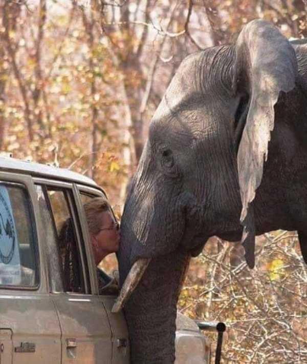 animal pic - Elephant
