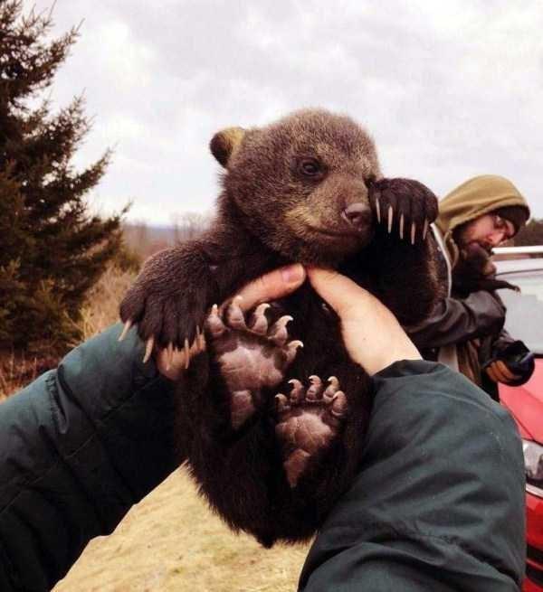 animal pic - Brown bear