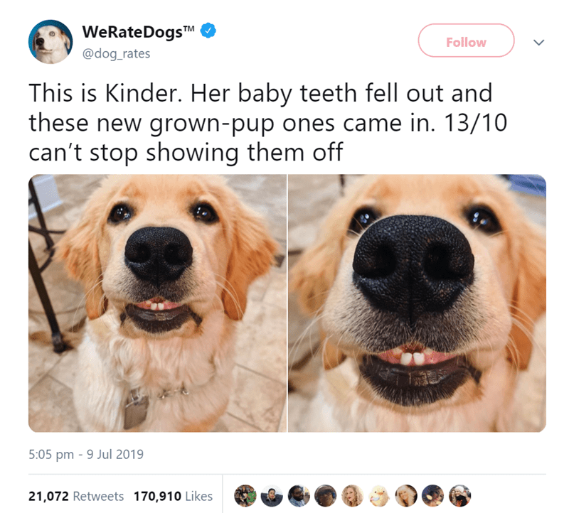 animals - Dog - WeRateDogsTM Follow @dog_rates This is Kinder. Her baby teeth fell out and these new grown-pup ones came in. 13/10 can't stop showing them off 5:05 pm 9 Jul 2019 21,072 Retweets 170,910 Likes