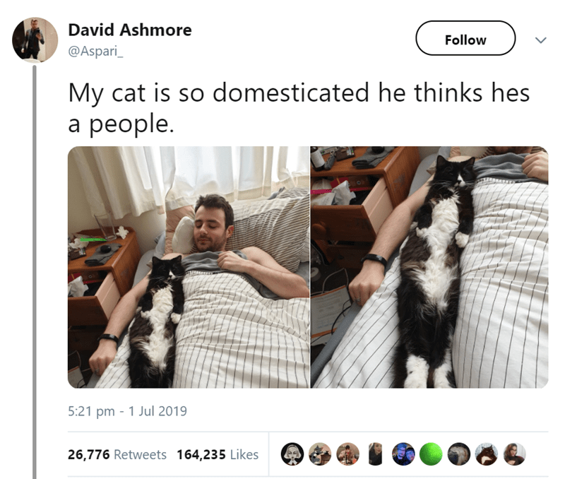 animals - Product - David Ashmore Follow @Aspari_ My cat is so domesticated he thinks hes а рeople. 5:21 pm 1 Jul 2019 26,776 Retweets 164,235 Likes