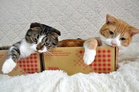 copycats - Cat - yored