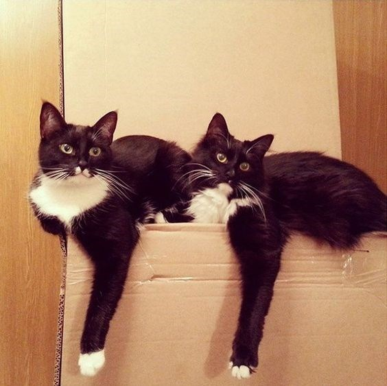 copycats - Cat