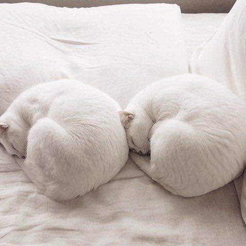 copycats - Cat