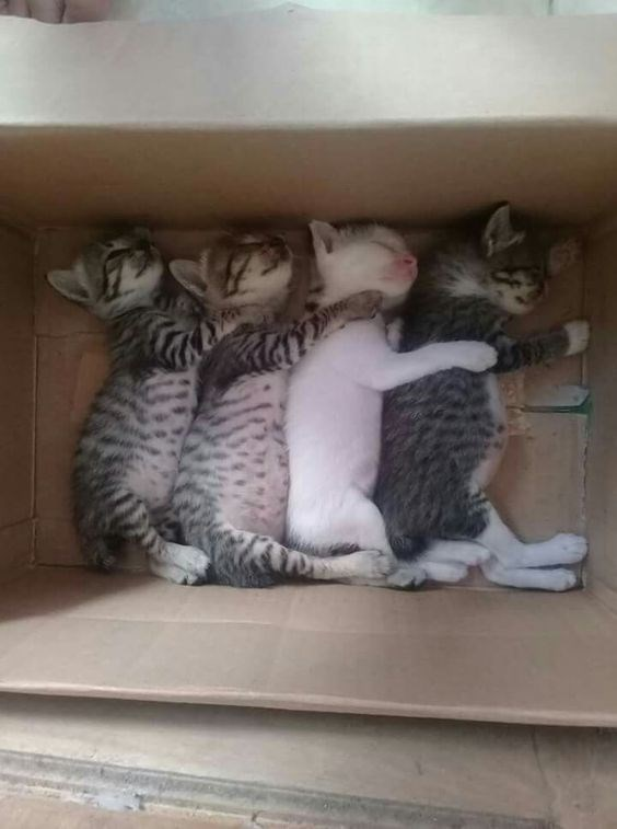 copycats - Cat - STAX