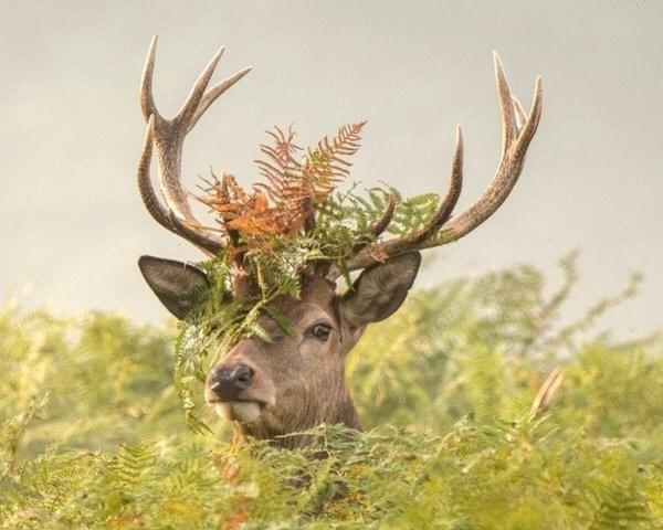 animal fact - Horn