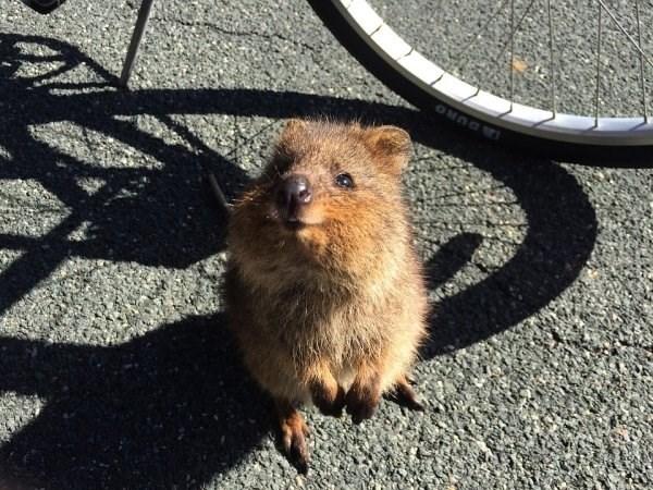 animal fact - Mammal
