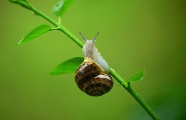 animal fact - Snails and slugs