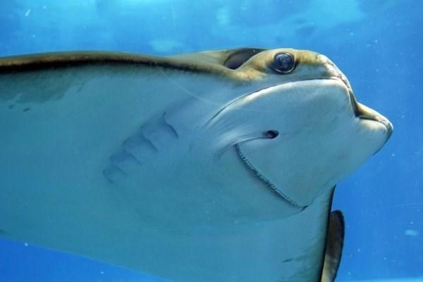animal fact - Fish