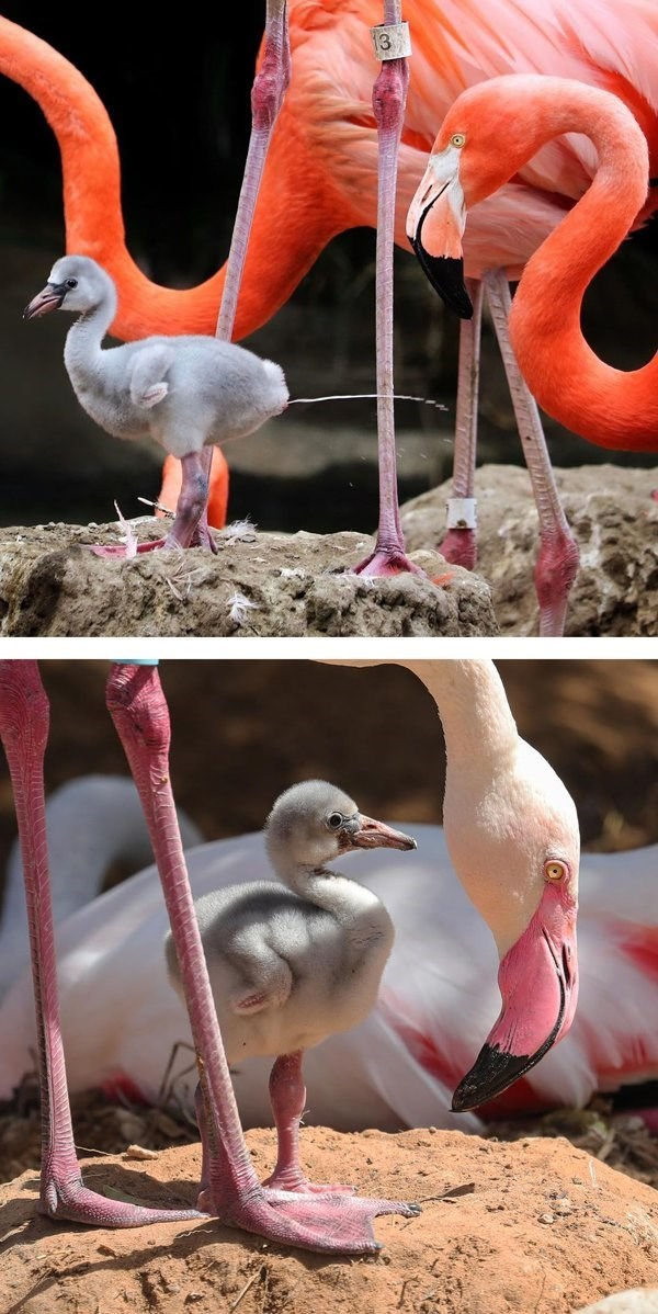 animal fact - Bird - 3