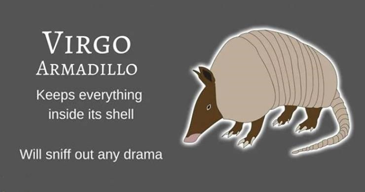 animal zodiac - Organism - VIRGO ARMADILLO Keeps everything inside its shell Will sniff out any drama
