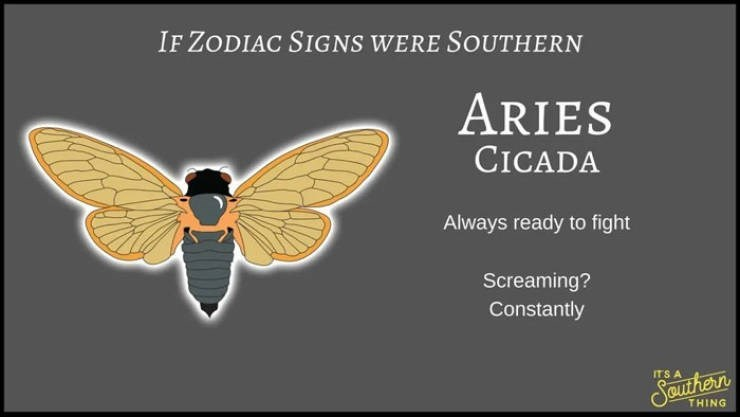 animal zodiac - Text - IF ZODIAC SIGNS WERE SOUTHERN ARIES CICADA Always ready to fight Screaming? Constantly ITS A Sauthern THING