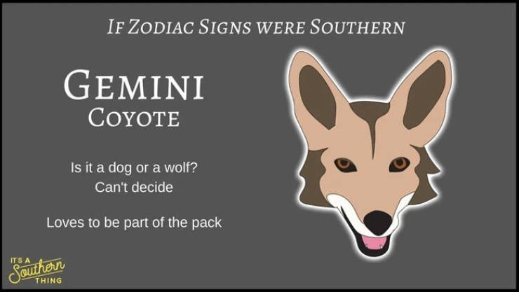 animal zodiac - Canidae - IF ZODIAC SIGNS WERE SOUTHERN GEMINI COYOTE Is it a dog or a wolf? Can't decide Loves to be part of the pack ITS A SBurhern THING