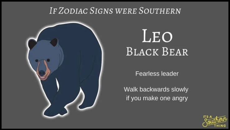 animal zodiac - Mammal - IF ZODIAC SIGNS WERE SOUTHERN LEO BLACK BEAR Fearless leader Walk backwards slowly if you make one angry ITS A Sauher n THING
