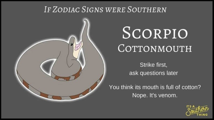 animal zodiac - Text - IF ZODIAC SIGNS WERE SOUTHERN SCORPIO COTTONMOUTH Strike first, ask questions later You think its mouth is full of cotton? Nope. It's venom. ITS A SBUuthern THING