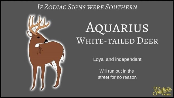 animal zodiac - Deer - IF ZODIAC SIGNS WERE SOUTHERN AQUARIUS WHITE-TAILED DEER Loyal and independant Will run out in the street for no reason ITS A Seauthern THING