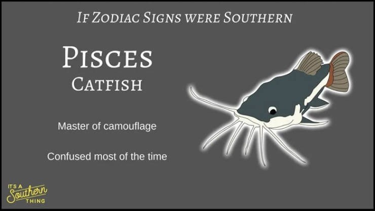 animal zodiac - Organism - IF ZODIAC SIGNS WERE SOUTHERN PISCES CATFISH Master of camouflage Confused most of the time ITS A Spurhern THING
