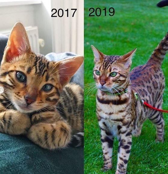 Cat - 2017 2019