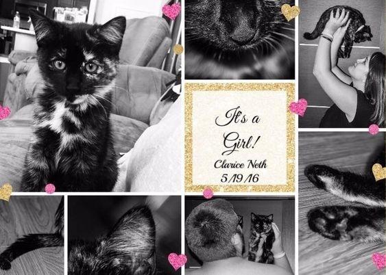 Pregnancy announcement - Cat - Its a Gel! Clarice Neth 5/1916 dek