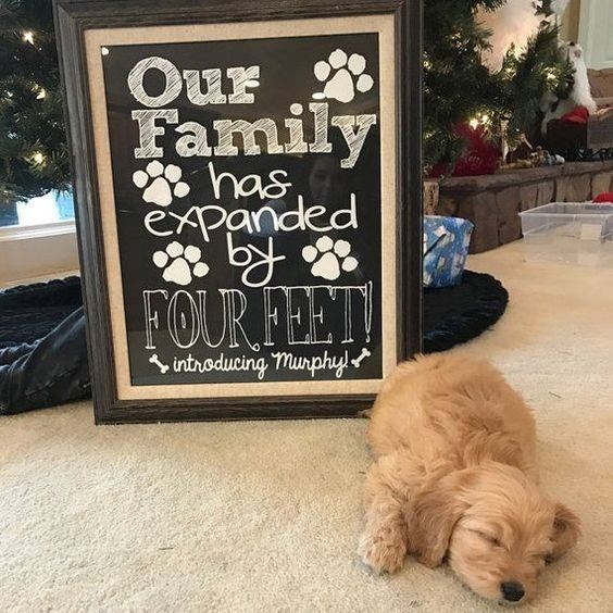 Pregnancy announcement - Dog - Our Family has expanded FOUR FEET! inthoducing munphy