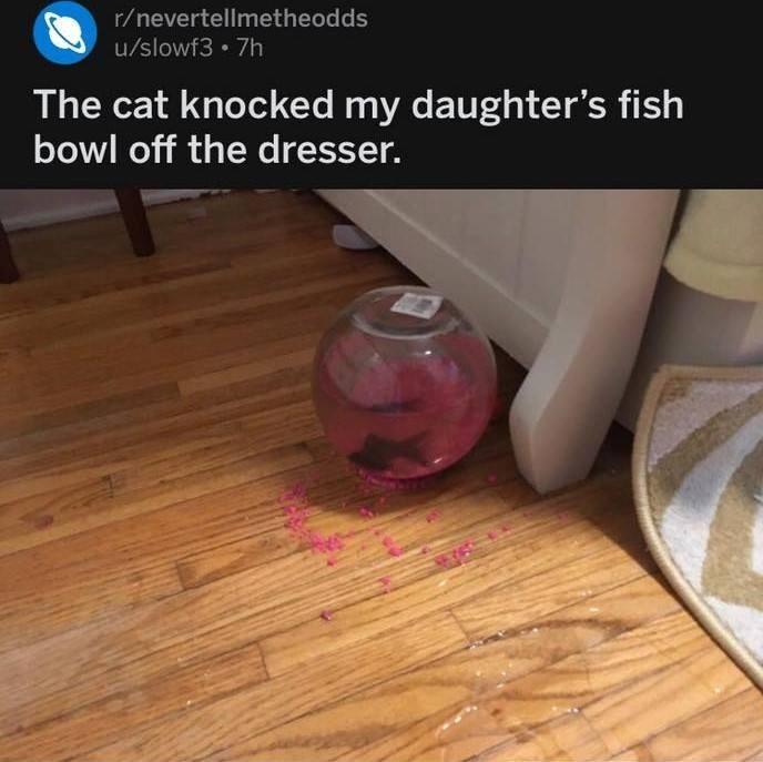 funny cats Cats fish Reddit Fishbowl - 9333325824