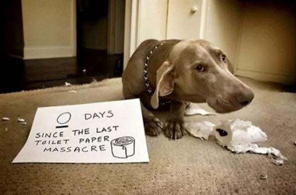 Dog - DAYS SINCE THE LAST TOILET PAPER MASSACRE