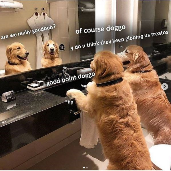 Dog - are we really goodbois? of course doggo y do u think they keep gibbing us treatos good point doggo *tap *tip