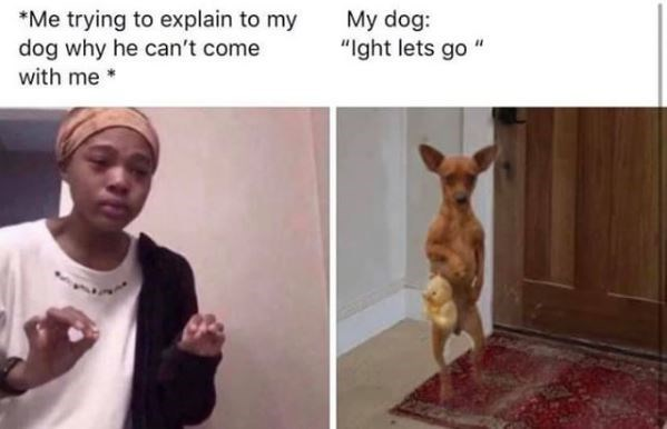 """Canidae - Me trying to explain to my dog why he can't come with me My dog: """"Ight lets go"""""""