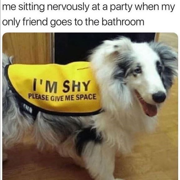 Dog - me sitting nervously at a party when my only friend goes to the bathroom I'M SHY PLEASE GIVE ME SPACE