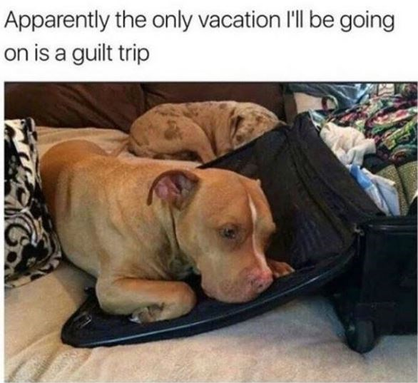 Dog - Apparently the only vacation 'll be going on is a guilt trip