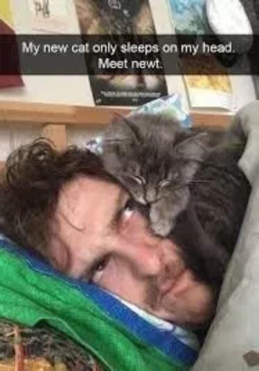 Cat - My new cat only sleeps on my head. Meet newt.