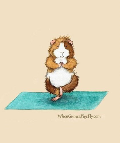 guinea pig yoga - Cartoon - whenGuineaPigsFly.com