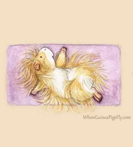 guinea pig yoga - Old english sheepdog - WhenGuineaPigsFly.com