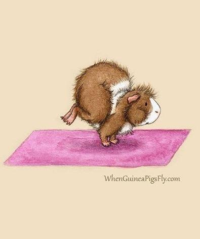 guinea pig yoga - Mouse - WhenGuineaPigsFly.com