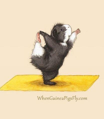 guinea pig yoga - Illustration - WhenGuineaPigsFly.com