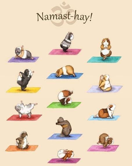 guinea pig yoga - Headgear - Namast-hay!