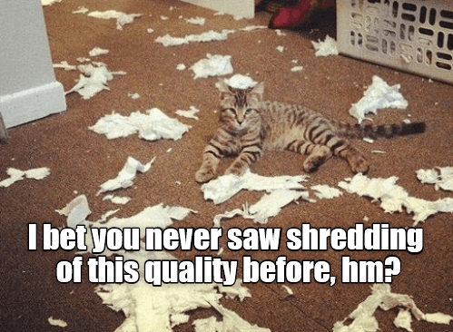 Felidae - I betyounever saw shredding of this quality before, hm?