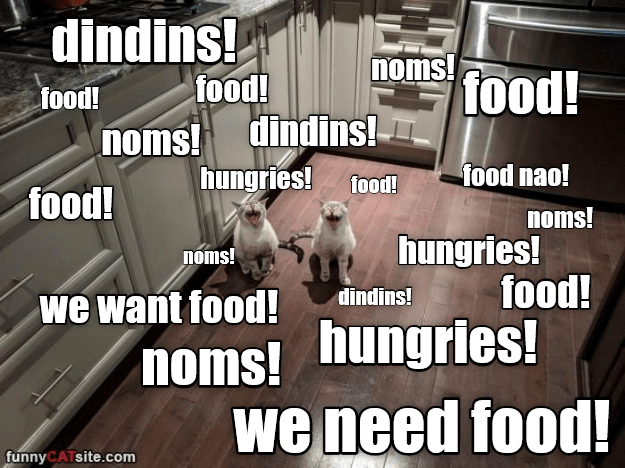 Photo caption - dindins! moms food! food! food! noms! dindins! hungries! food! food nao! food! noms! hungries! food! noms! dindins! we want food! noms! hungries! we need food! funnyCATsite.com