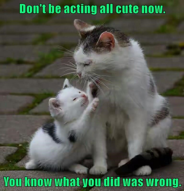 Cat - Don't be acting all cute now. You know what you did was wrong.