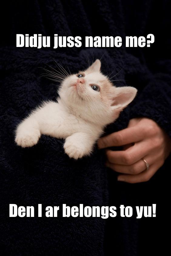 Cat - Didju juss name me? Den I ar belongs to yu!