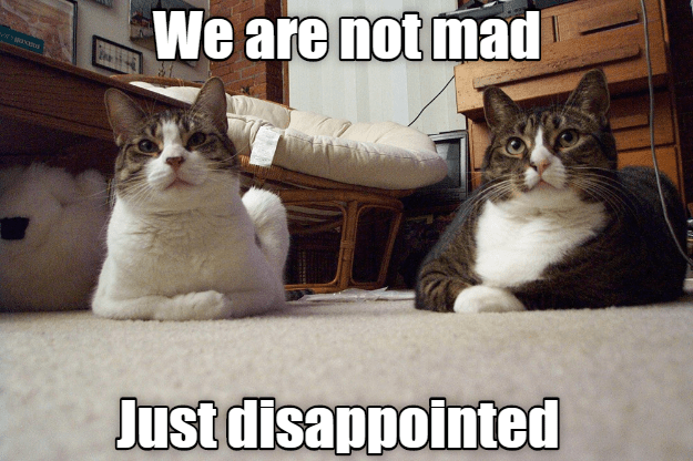 Cat - We are not mad Just disappointed