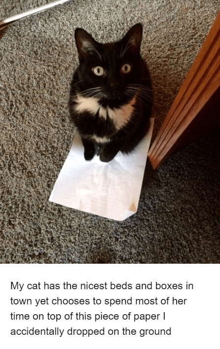 Cat - My cat has the nicest beds and boxes in town yet chooses to spend most of her time on top of this piece of paper I accidentally dropped on the ground