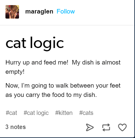Text - maraglen Follow cat logic Hurry up and feed me! My dish is almost empty! Now, I'm going to walk between your feet as you carry the food to my dish #cat #cat logic #kitten #cats 3 notes A