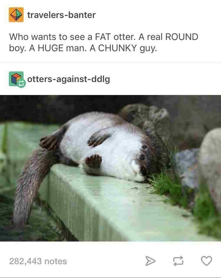 Adaptation - travelers-banter Who wants to see a FAT otter. A real ROUND boy. A HUGE man. A CHUNKY guy. otters-against-ddlg 282,443 notes